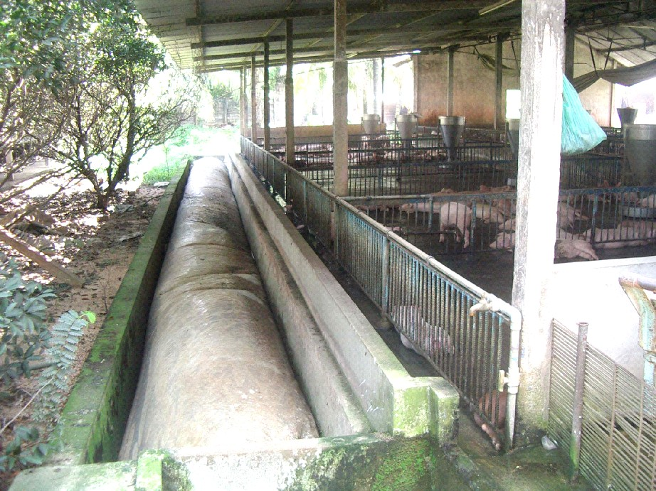 Nước thải từ quá trình chăn nuôi