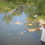 Nước thải của các hồ nuôi tôm