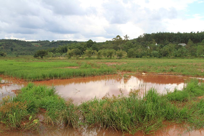 Bùn đỏ tràn vào ruộng