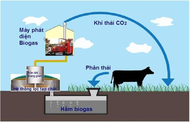 Quy trình xử lý chất thải chăn nuôi