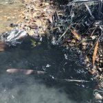 Dầu thải xả xuống sông Đà
